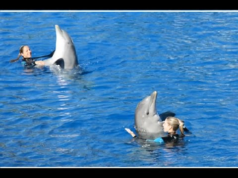 Spectacle dauphins - Oceanographic 2016