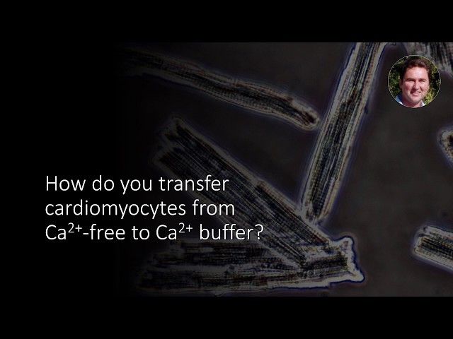 How to transfer cardiomyocytes from Ca2+-free to Ca2+ buffer