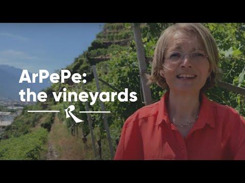 ArPePe in Valtellina - The vineyards