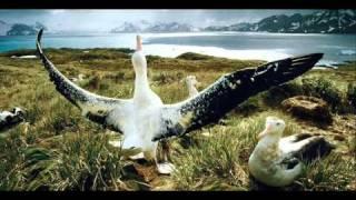 Darwin & Backwall feat. Emelie Wallin - Good Morning Stockholm ( Andre Sobota Remix )