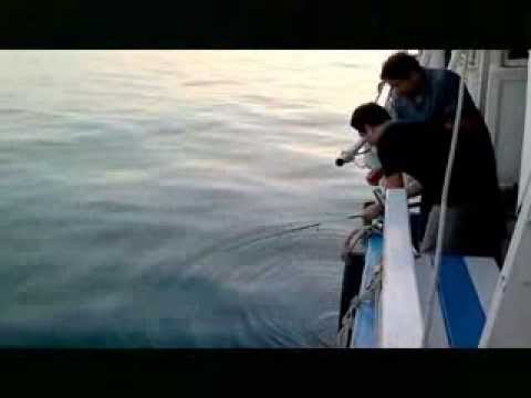 ตกปลาทะเลสัตหีบ2 25-26/11/2013