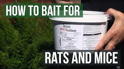 Eratication Peanutbutter Rat and Mouse Poison Bait Blocks (How to bait for rats and mice)