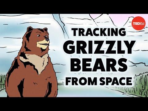 Video image: Tracking grizzly bears from space - David Laskin
