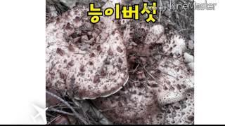 식용버섯 종류