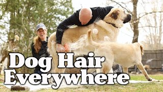 HOW TO BRUSH YOUR DOG AT HOME  BEST TOOLS TIPS  GROOMING FOR SHEDDING DOGS  WHAT TO USE