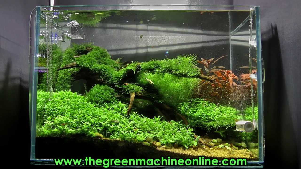 riverbank aquascape the green machine by james findley youtube