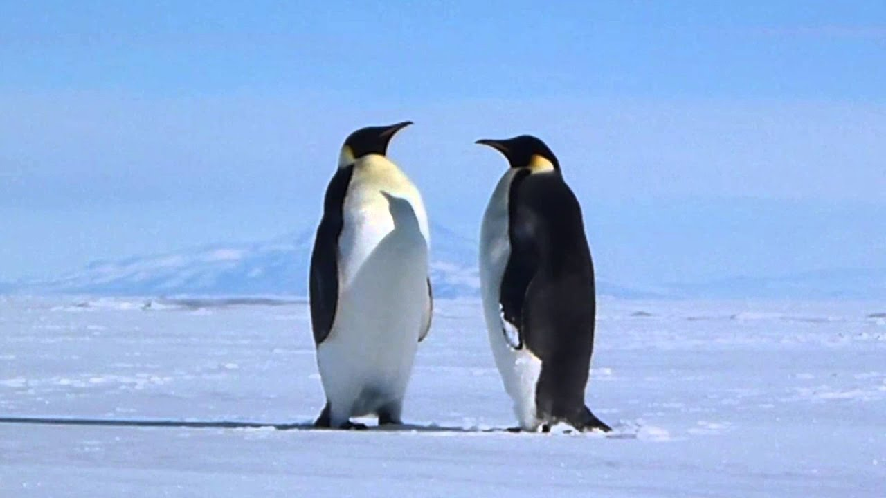 penguins animals antarctic scenery emperor mountains