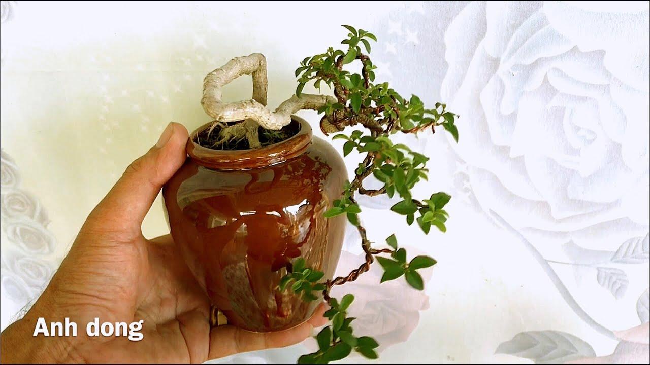 Uốn cây bonsai trồng từ rễ