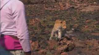 national geographic unlikely animal friends part 1 of 6