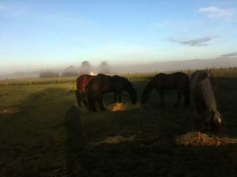 Wild Mustang Herd- Stallion Kills Foal- Horse Killed by Lightening - Rick Gore Horsemanship