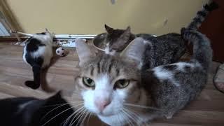 Приют для животных Краснодог в Краснодаре