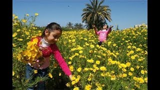 Arab Desert Spring جنة في وسط الصحراء روضة خريم