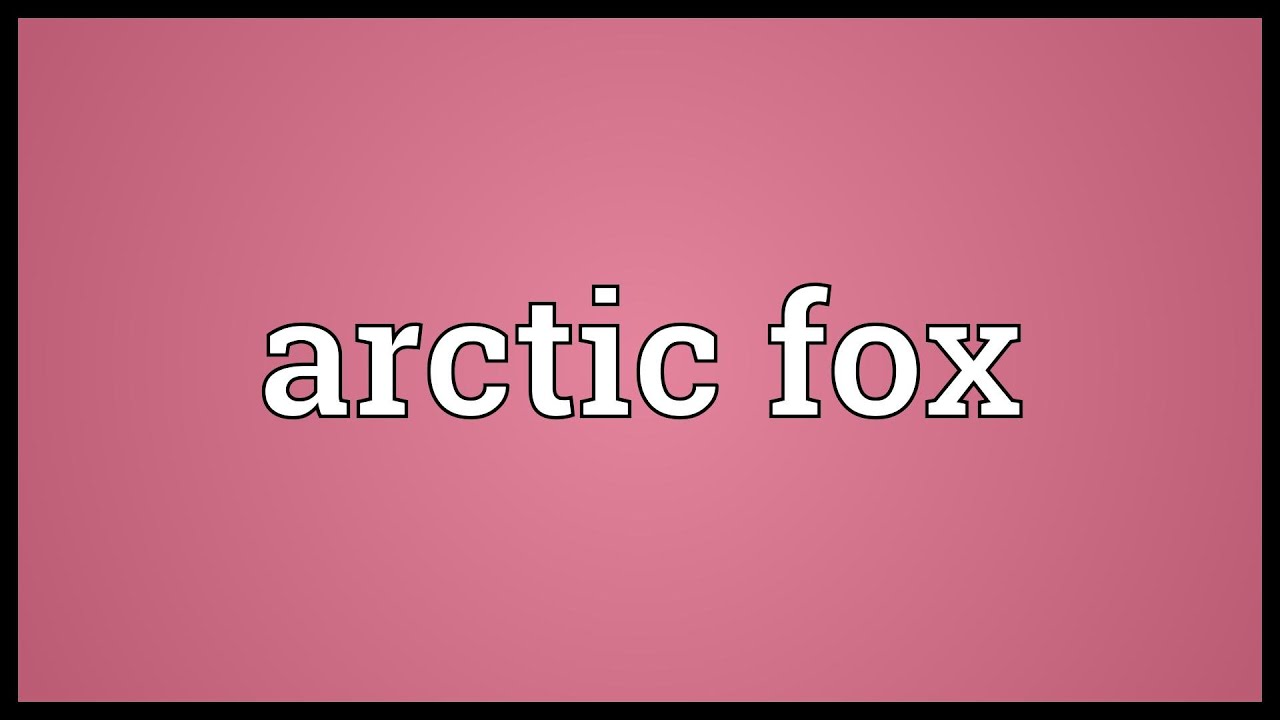Arctic fox meaning youtube arctic fox meaning buycottarizona