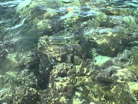 Coral Heads in Pohnpei lagoon