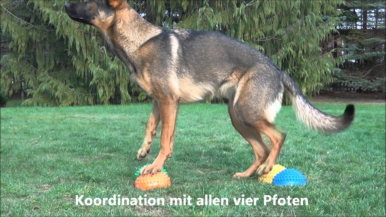 Sporthundde