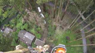 70 Metre Mountain Ash Removal Day 1 And 2