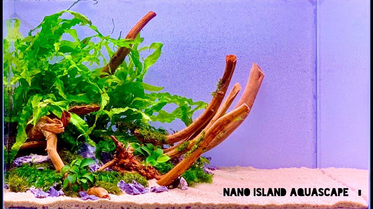 Nano Island Shrimp Tank Aquascape - YouTube