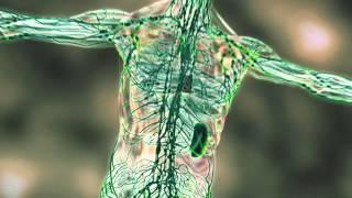 The Immune System: Running as Preventative Medicine - Sports Science: Running