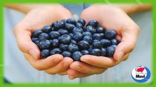 Propiedades y beneficios de los arandanos para la salud