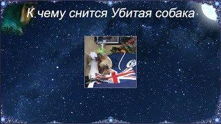 К чему снится Убитая собака (Сонник)