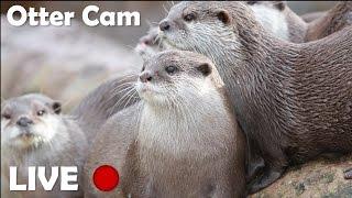 Otters Live