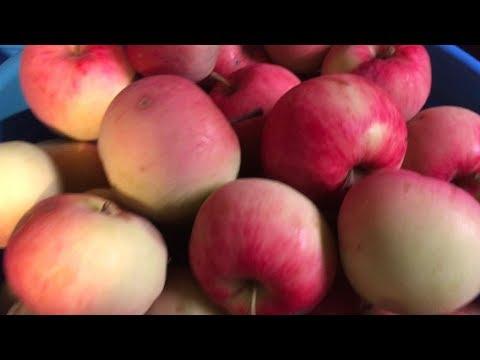 Как можно переработать яблоки