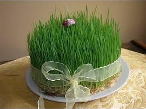 How To Grow Sabzeh For Haft Sin - آموزش سبز کردن سبزه گندم