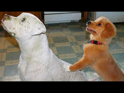 Puppy Playing With Big Dog Compilation