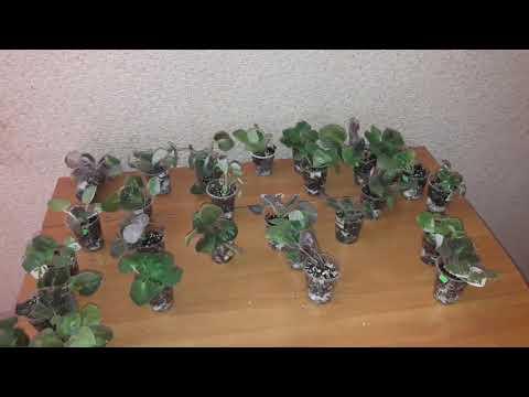 Ужас который мне пришел по обмену растениями!!!