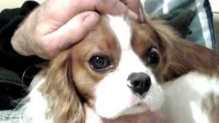 Pop Eye Dog Wants A Thousand Bones
