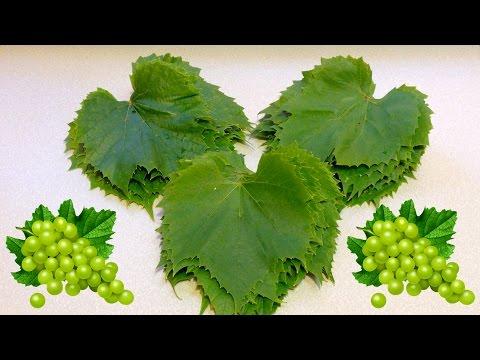 Как подготовить виноградные листья для долмы
