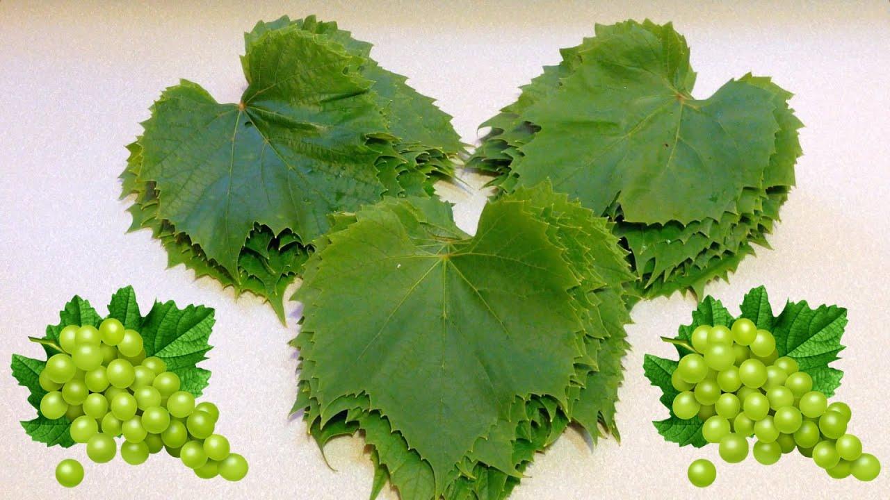 Если овощи и мясо можно купить в магазине, то за виноградными листьями придется идти на рынок. Летом есть шанс найти свежие, засоленные продаются круглый год в отделе маринадов и солений. Выбирать надо листья поярче, размером, желательно, с ладонь, не больше. Чем моложе и нежнее лист,