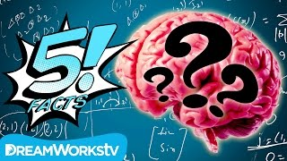 5 Myths About The HUMAN BRAIN Busted!   5 FACTS