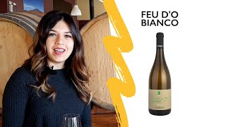 FEU D'O BIANCO 2019 Video