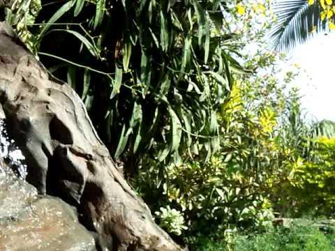 Cascada esquinera y orquideas dise o de jardines y for Jardines de orquideas