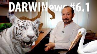 DARWINews #6.1: Францию захватили черви, как появились белые тигры, король-океанограф