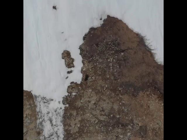 Schneeklettern mit Bären