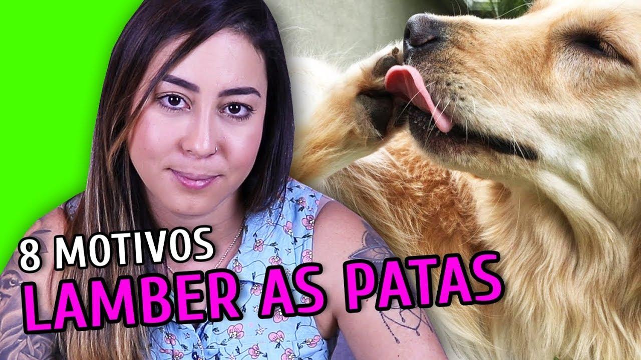 8 MOTIVOS PRO CACHORRO LAMBER AS PATAS
