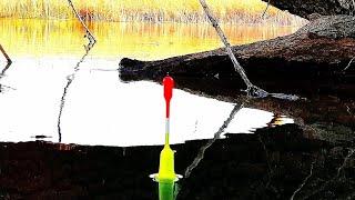 Рыбалка в мае ЭХОЛОТ ЗАШКАЛИВАЕТ нашли стаю РЫБЫ СКОЛЬКО ЕЕ ТУТ