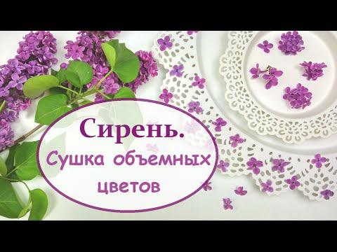 ЮВЕЛИРНАЯ СМОЛА    Как засушить сирень? Объемная сушка    How to dry a lilac?