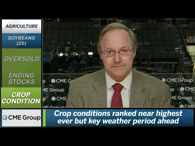 June 20 Grains Commentary: Terry Roggensack