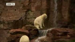 Germany: Au Revoir to Flocke the Polar Bear   European Journal