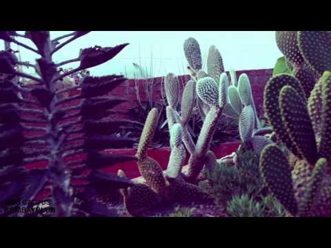 Bombay Blur - Miss Cactus