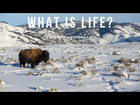What is Life?  The breath of a buffalo in the wintertime.