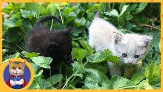 Спасение двух маленьких котят