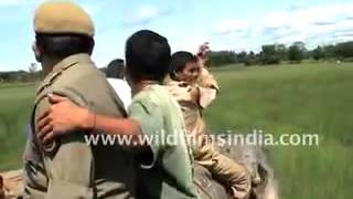 The full video of tiger attacking