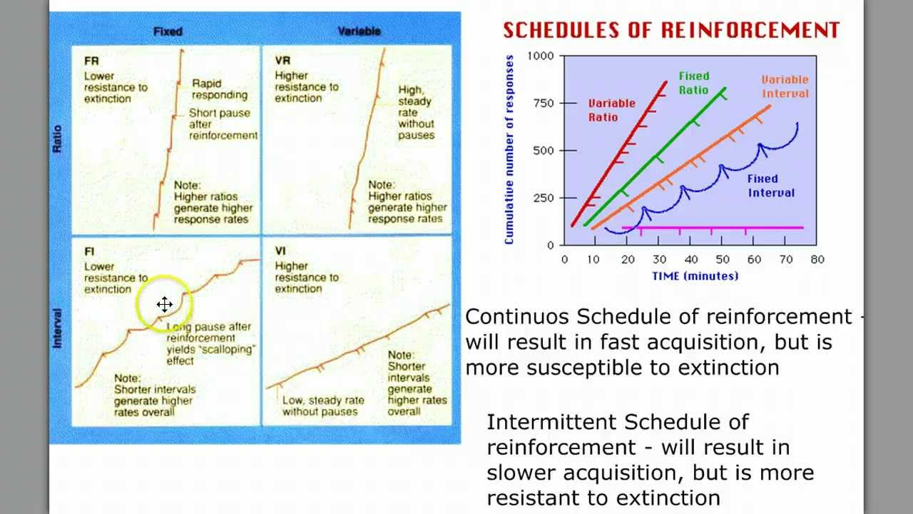Learning Part 3 - Schedules of Reinforcement - YouTube