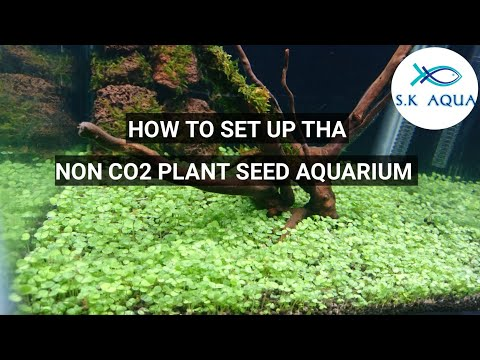 How to setup the non co2 plant seed aquarium.[TAMIL]