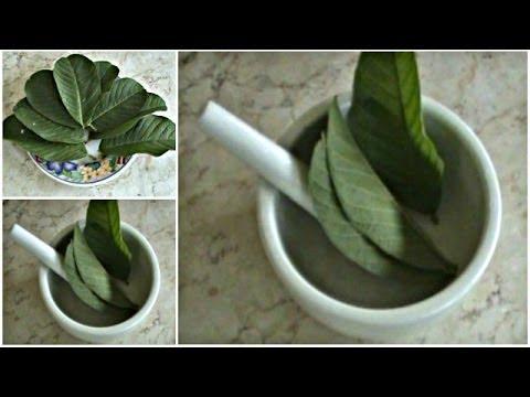 obat-sariawan-alami:-cara-menyembuhkan-sariawan-dengan-ramuan-obat-herbal-jambu-biji