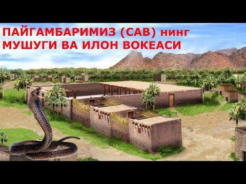 Пайгамбаримиз Сав нинг Мушуги ва Илон вокеаси хикоя